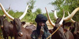 Fulani-Herdsmen-in-Nigeria.jpg