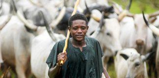Fulani herder.jpg